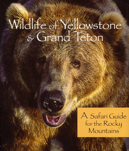 Wildlife of Yellowstone  &  Grand Teton: A Safari Guide for the Rocky Mountains - Bill Perry