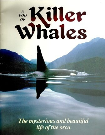 A Pod of Killer Whales : The Mysterious Life of the Intelligent Orca - Vicki Leon