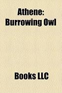 Athene: Burrowing Owl