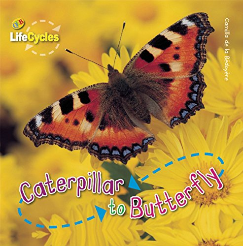 Caterpillar to Butterfly (LifeCycles) - Camilla de la Bedoyere