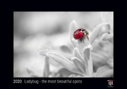 Ladybug - the most beautiful spots 2020 - Black Edition - Timocrates wall calendar with US holidays / picture calendar / photo calendar - DIN A3 (42 x 30 cm)