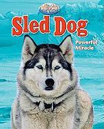 Sled Dog: Powerful Miracle