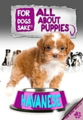 All About Havanese Puppies - Jenny Milbrook