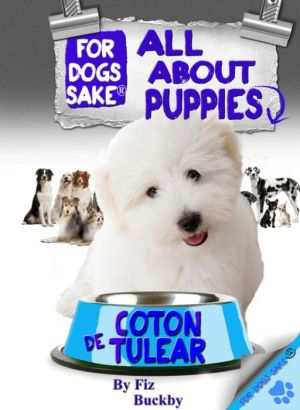 All About Coton de Tulear Puppies